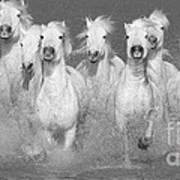 Nine White Horses Run Print by Carol Walker