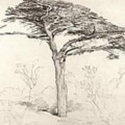 Old Cedar Tree In Botanic Garden Chelsea Print by Samuel Palmer