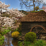 Old Cherry Blossom Water Mill Print by Sebastian Musial