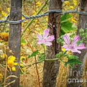 On The Fence Print by Lainie Wrightson