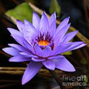 One Purple Water Lily Print by Carol Groenen