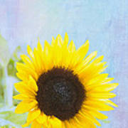 One Sunflower Print by Kay Pickens