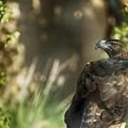 Only An Eagle Can Be As Sharp As An Eagle Print by Munir El Kadi