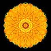 Orange Nasturtium Flower Mandala Print by David J Bookbinder