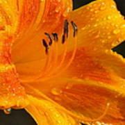 Orange Rain Print by Karen Wiles