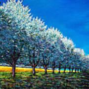 Orchard Row Print by Johnathan Harris