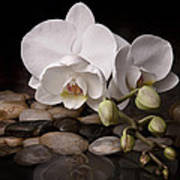 Orchid - Sensuous Virtue Print by Tom Mc Nemar