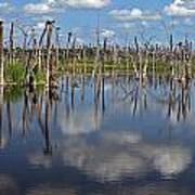 Orlando Wetlands Cloudscape 5 Print by Mike Reid