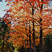 Over The Hill And Through The Trees Print by Jeff Folger