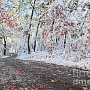 Painted Snow Print by Catherine Reusch  Daley