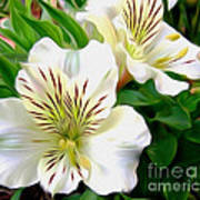 Painterly Alstroemeria Print by Kaye Menner