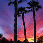 Palm Trees Sunset Print by Robert Bales