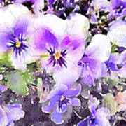 Pansies Watercolor Print by John Edwards