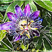 Passion Fruit Flower Print by Nato  Gomes
