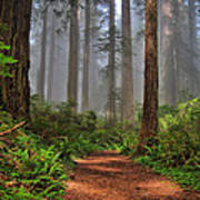 Path Thru The Redwoods Print by Michael  Ayers