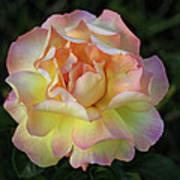 Peace Rose Print by Sandy Keeton