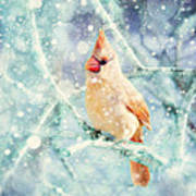 Peaches In The Snow Print by Amy Tyler