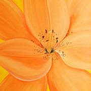 Peachy Summer Print by Maria Williams
