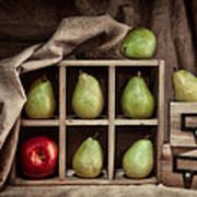 Pears On Display Still Life Print by Tom Mc Nemar