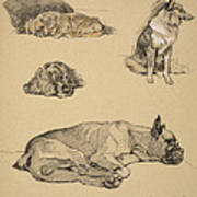 Peke, Collie, Spaniel And German Boxer Print by Cecil Charles Windsor Aldin