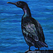 Pelagic Cormorant Print by Crista Forest
