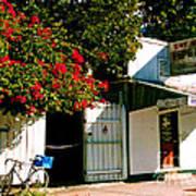 Pepes In Key West Florida Print by Susanne Van Hulst