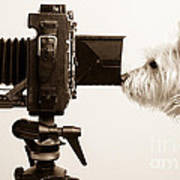 Pho Dog Grapher Print by Edward Fielding