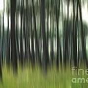 Pine Forest.blurred Print by Bernard Jaubert
