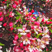Pink Magnolia 2 Print by Joann Vitali