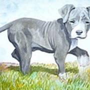 Pitbull Puppy Print by Martial Martin