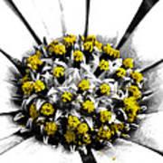 Pollen  Print by Steve Taylor