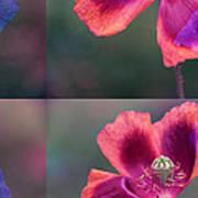 Poppy Print by Eiwy Ahlund
