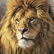 Portrait Of A Lion Print by Lucie Bilodeau