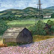 Potato Blossoms Print by Paula Robertson