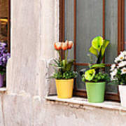 Potted Flowers 02 Print by Rick Piper Photography