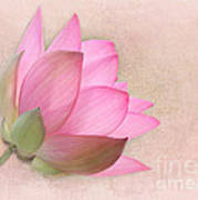 Pretty In Pink Lotus Blossom Print by Sabrina L Ryan