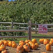 Pumpkins On The Farm Print by Joann Vitali