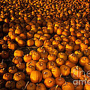 Pumpkins Print by Ron Sanford