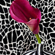 Purple Calla Lily Print by Garry Gay
