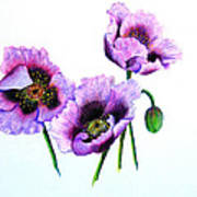 Purple Oriental Poppies Print by Karin  Dawn Kelshall- Best