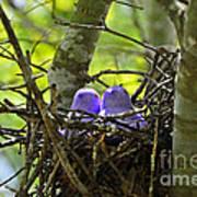 Purple Peeps Pair Print by Al Powell Photography USA
