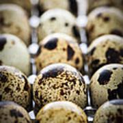 Quail Eggs Print by Elena Elisseeva