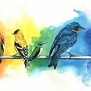 Rainbow Birds Print by Antony Galbraith