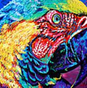 Rainbow Macaw Print by Maria Arango