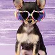 Rainbow Sunglasses Print by Greg Cuddiford