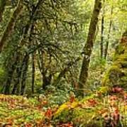 Rainforest Trunk Print by Adam Jewell