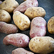 Raw Potatoes Print by Elena Elisseeva