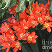 Red Blossoms At Lax Print by Deborah Smolinske