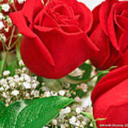 Red Roses With Baby's Breath Print by Ann Murphy