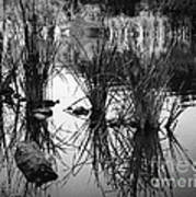 Reeds Print by Arne Hansen